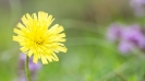 fiori_10