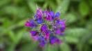 fiori_11