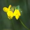 fiori_12